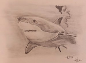 Great white shark drawn in pencil.