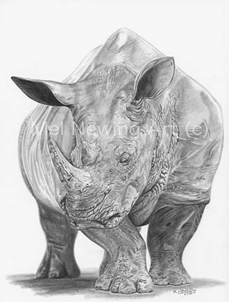 Baby rhino drawing in graphite pencil