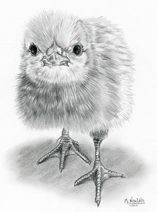 Chick Chick! Drawn in graphite pencil.