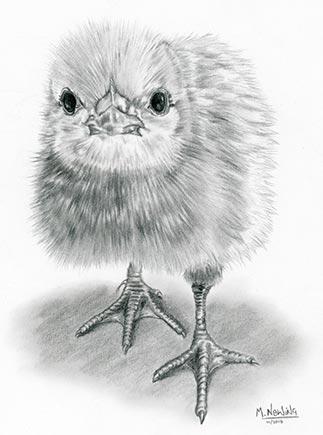 Chick Chick! Drawn in graphite pencil.