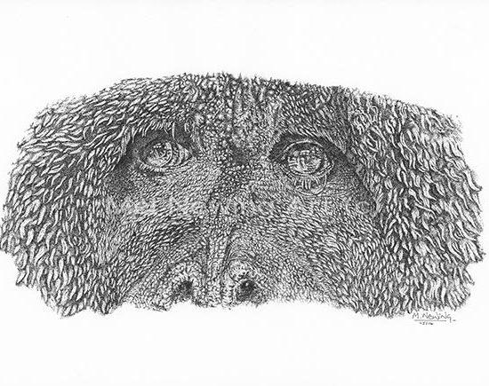 Orangutan draw in pen