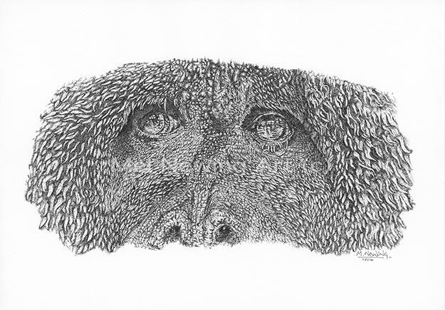 Uncategorized Orangutan Drawing orangutan drawing the old man of forest mel newing art draw in pen