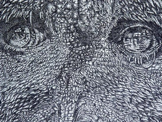 Close up of the orangutan