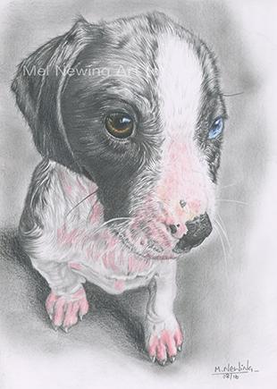 Graphite and pastel pencil pet portrait commission