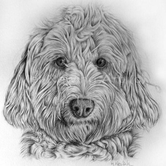 Graphite pencil pet portrait commission