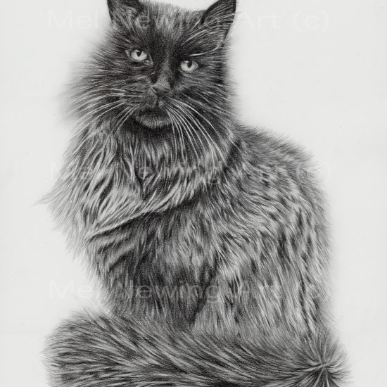 Scanned final picture of pet portrait commission drawing.