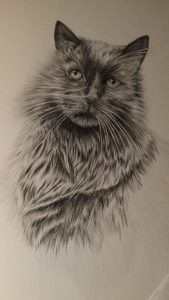 Cat drawing in Derwent Graphic Pencil range