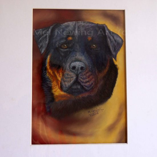 Rottweiler pastel art head portrait