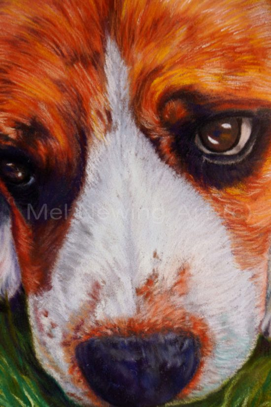 Beagle drawn in pastel close up