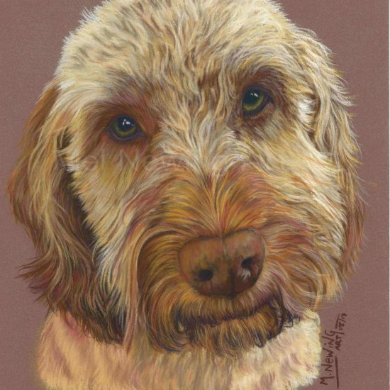 Cockapoo Pastel artwork on pastelmat paper