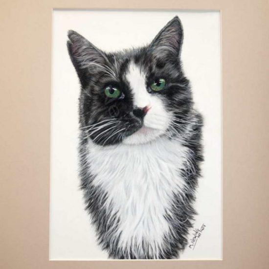 Pastel cat portrait commission