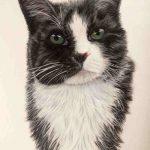 Cat pet portrait commission in pastel