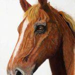 Pastel horse commission