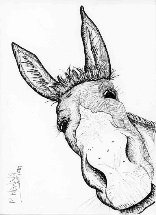 Donkey ink pen art