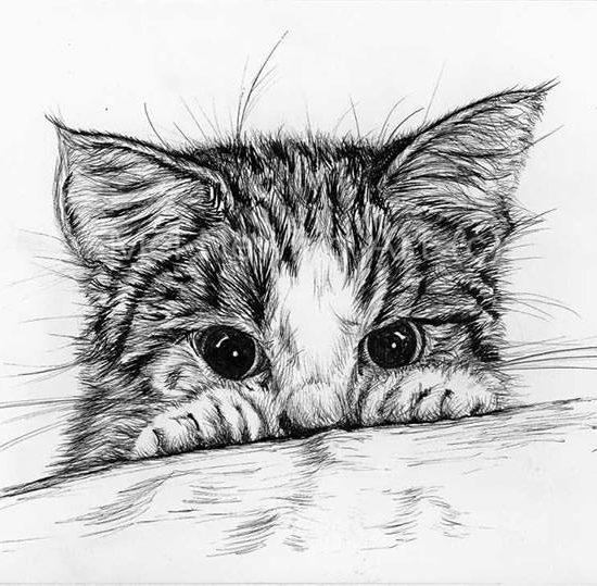 Kitten ink pen art
