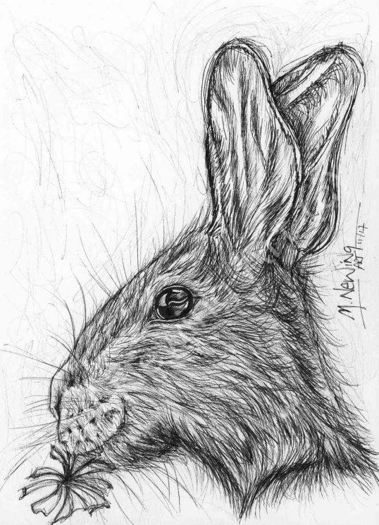 Rabbit Ink Pen Art