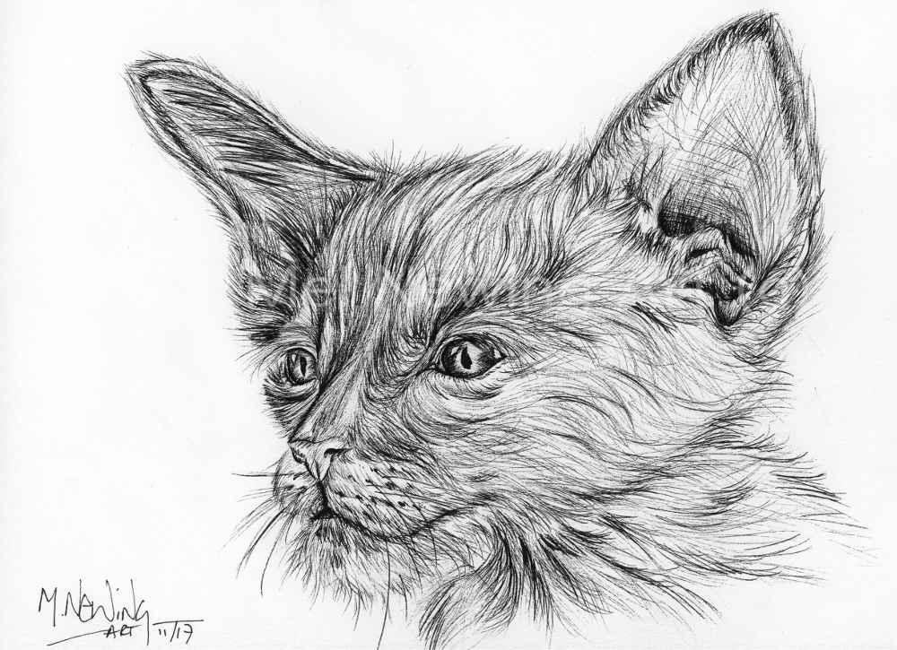 Sphynx Kitten Ink Pen Art