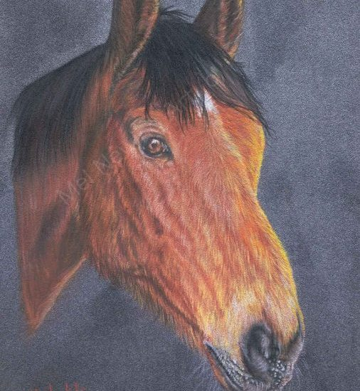 Chestnut horse drawn with pastels
