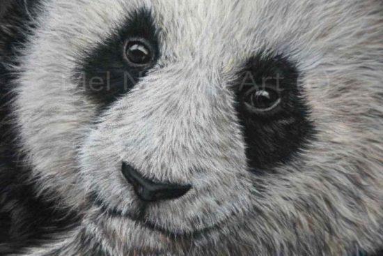 Giant Panda close up created using pastels