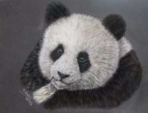 Giant Panda created using pastels
