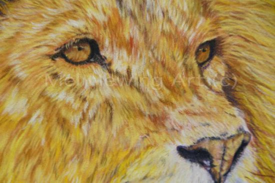 Close up of male lion eyes in pastels.