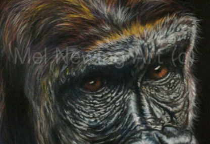 Close up of Gorilla eyes in pastels