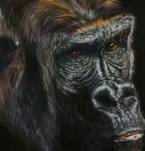 Close up of Gorilla eyes in pastel