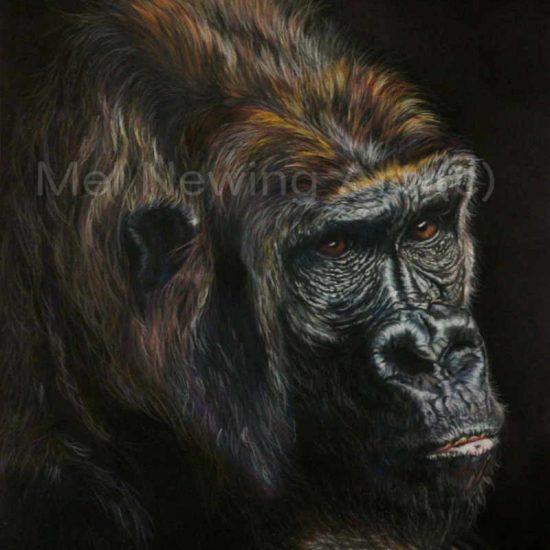 Mountain Gorilla drawn in pastels