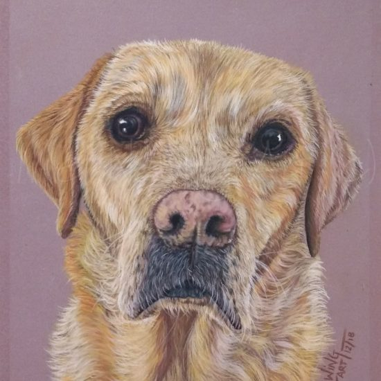 Commissioned pet portrait drawn using pastels