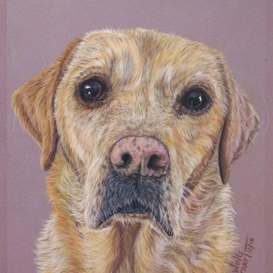 Commissioned pet portrait drawn using pastels